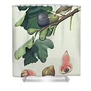 - Fico Fetifero And Fico Dell Osso Shower Curtain