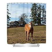 Horse Unbrideled Shower Curtain