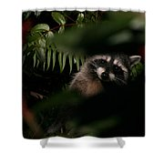 I Can See You  Mr. Raccoon Shower Curtain