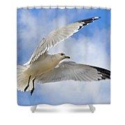 Jekyll Island Seagull Shower Curtain