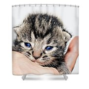 Kitten In A Hand Shower Curtain by Susan Leggett