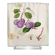 La Royale Plum Shower Curtain