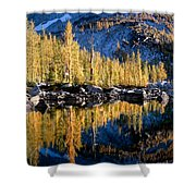 Larch Tree Reflection  Shower Curtain