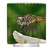Austrogomphus Dragonfly Shower Curtain