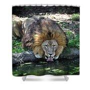 Lion Drinking Water Shower Curtain