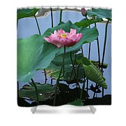 Lotus Flower At Calloway Shower Curtain