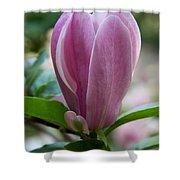 Magnolia Bud Shower Curtain