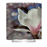 Magnolia Flowers In Spring Time Shower Curtain