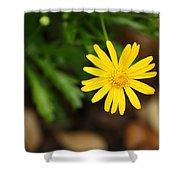 Marguerite Yellow Daisy Shower Curtain