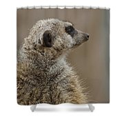 Meerkat Shower Curtain by Ernie Echols
