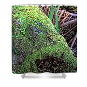 Mossy Dead Log Shower Curtain
