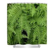 Mountain Ferns Of North Carolina Shower Curtain