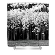 New Mexico Aspens Shower Curtain