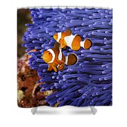 Ocellaris Clownfish Shower Curtain