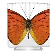 Orange Butterfly Species Appias Nero Neronis  Shower Curtain