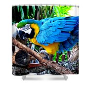 Parrot Greeting Card Shower Curtain