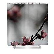 Peach Blossom II Shower Curtain