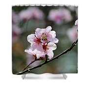 Peach Blossoms I Shower Curtain