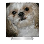 Peanut - 043 Shower Curtain