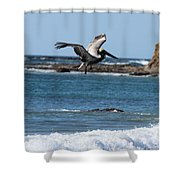 Pelican With Wet Feet Shower Curtain