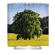 Rapeseed Field  Shower Curtain