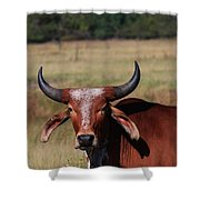 Red Brahma Bull In A Pasture Shower Curtain by Robert D  Brozek