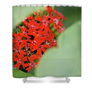 Red Butterfly Buds By Jammer Shower Curtain