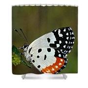 Red Pierrot Butterfly Shower Curtain