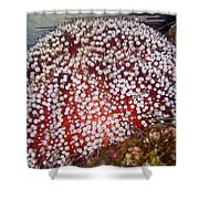 Red Sea Fire Urchin Shower Curtain