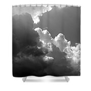 Seagulls In Flight Mb058bw Shower Curtain