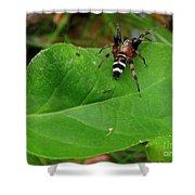 Sergiolus Capulatus  Shower Curtain