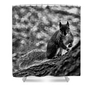 Squirrel In The Park V3 Shower Curtain