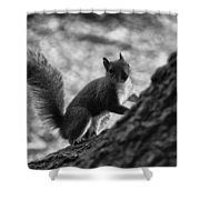 Squirrel In The Park V4 Shower Curtain