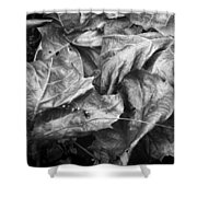 Sycamore Leaves In Autumn Shower Curtain