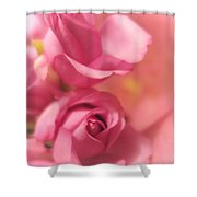 Tenderness Pink Roses 1 Shower Curtain