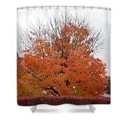 Thanksgiving Greetings Shower Curtain