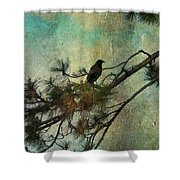 The Old Pine Tree Shower Curtain