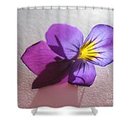 Transparency  Shower Curtain