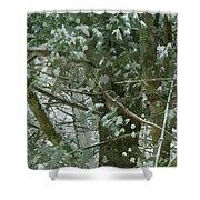 Tree Branch Shower Curtain