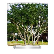 Trees In A Suburban Neighborhood In Summer Shower Curtain