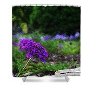 Violet Flower Shower Curtain