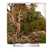 Weathered Tree Sunrise Canyon Dechelly Shower Curtain