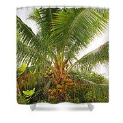 Westmoreland Jamaica 4 Shower Curtain