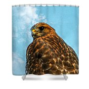 What Are You Looking At Red Shoulder Hawk Shower Curtain