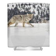 Winter's Determination Shower Curtain