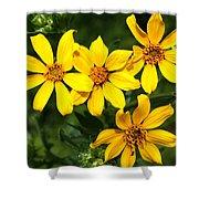 Yellow Texas Wildflowers Shower Curtain