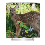 Young Fawn In The Grass Shower Curtain