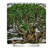 001 Bonsai Summer Show Buffalo Botanical Gardens Series Shower Curtain