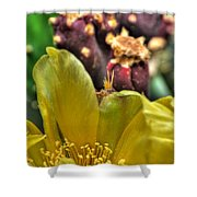 001 For The Cactus Lover In You Buffalo Botanical Gardens Series Shower Curtain