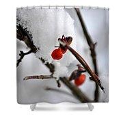 001 Frozen Berries Shower Curtain